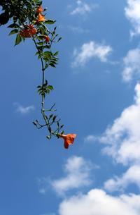 青空に映えるトランペット - 丹馬のきょうの1枚