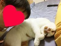 ネコと青森土産 - チー坊の徒然なるままに