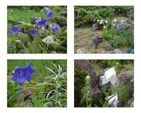 湯沢高原「アルプの里」を訪れる(パート2) - 折々の記