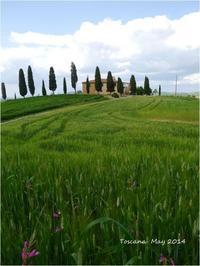 Toscana May 2014 - Chaton の ひとりごと