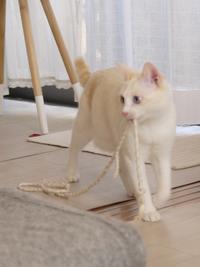 猫のお留守番 ニーナちゃんムーくん編。 - ゆきねこ猫家族