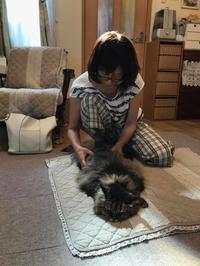 猫ちゃんのリハビリマッサージ - はばたけ MY SOUL