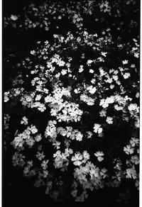 花 - Arte Garecchi