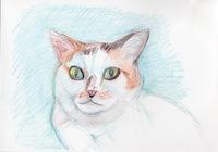 猫の目 - 絵を描きながら
