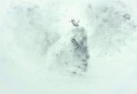 《 盛夏山翡翠 》 - 『ヤマセミの谿から・・・ある谷の記憶と追想』
