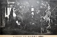 百鬼夜話51-100(終) - 揺りかごから酒場まで☆少額微動隊
