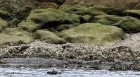★海浜公園の鳥類情報とイベントのお知らせ - 葛西臨海公園・鳥類園Ⅱ
