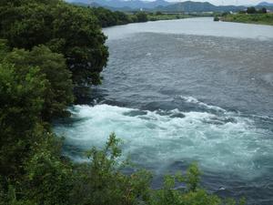『高砂百合(タカサゴユリ)と赤芽槲(アカメガシワ)と長良川・・・・・』 -