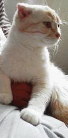 のんびり - 猫の小路