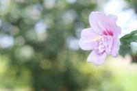 7月の花菜ガーデン☆彡 - 僕の足跡
