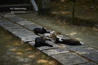 野良猫たちの避暑地 - Mark.M.Watanabeの熊本撮影紀行