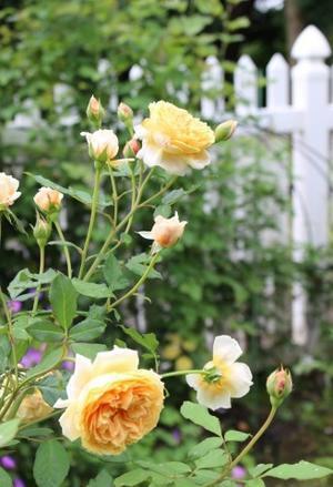 ちっちゃい子軍団 - HOME SWEET HOME ペコリの庭 *