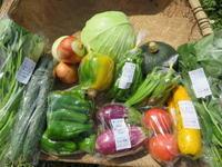 今週の野菜セット 8月3週目 - まるみど農園のあれこれ日記