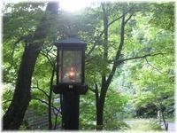 lamp - 花図鑑