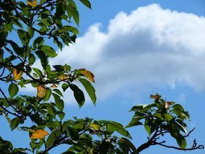 2017年08月19日・・・お空を見ながらデジスケッチ - 空と雲,季節の風と光と・・・景色