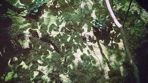 藤原新也「沖ノ島展」 - 野崎哲郎建築設計事務所 のblog