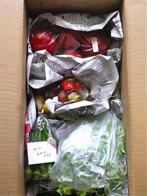 ベジプールから野菜が到着 -