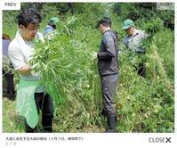 本日(8/19)の北海道観光ニュース-野生大麻 - SEのための心理相談室
