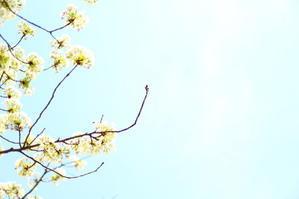 ikiESPREESO・清澄庭園・ブルーボトルコーヒー・torse -清澄白河- - POPAI PHOTO