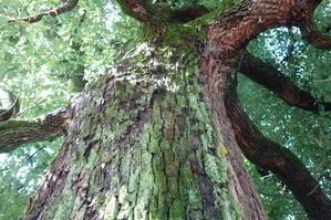木肌に生えてきた苔 - 里山ガーデン2