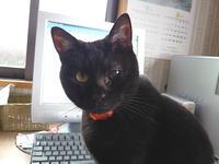 【更新終了のお知らせ】シン、虹の橋へ - 十猫十色 with Wan!