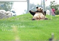 上野のパンダ誕生、和歌山アドベンチャーワールドのパンダ…もいいけどしろくまも見てねゴーゴ返してね - 東京女子フォトレッスンサロン『ラ・フォト自由が丘』-写真とフォントとデザインと-