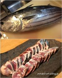 釣り カツオ - 食楽紀行