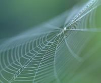 蜘蛛の巣 - 休日はタンデムツーリング