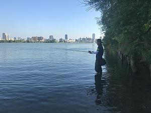 ミスチョイス・・・ - WaterLettuceのブログ