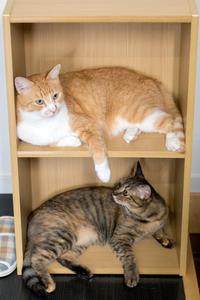 カラーボックス - 猫と夕焼け