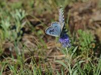 草原の風に翔ぶ蝶を追って(その18) - 不思議の森の迷い人