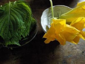 あそんでるバアイじゃないんだけど ね  かぼちゃの花は 甘い - こばやしゆふ   yu-kobayashi   はてしない
