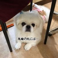 店長の日記〜遊び〜 - トリミングサロンオリーブスタッフ日記