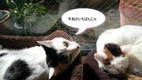 かわいいものを探す旅★手芸リボン専門店・店長のプラハ旅行記~準備編~たびレジに登録しよう! - リボン日和