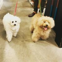 Hello スー&モーリー!! - Doggie Do!! / good dog and hello cat !!