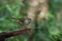 今日の鳥見(2017年8月20日) - ほとんど野鳥写真日記