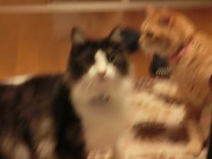 落雷と猫たち。 - ネコトバイク2-東京ソロライダー☆