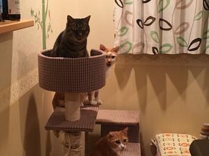 初めての同窓会 - 「両手のない猫」チビタと愉快な仲間たち