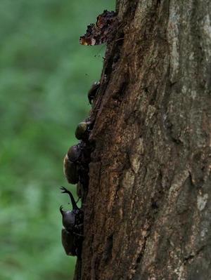 ルリタテハやカブトムシたちの共存生活 -