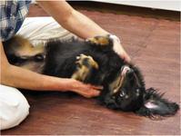 ドッグマッサージ 8/20 - SUPER DOGS blog