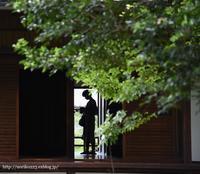 silhouette - Noriko's Photo  -light & shadow-