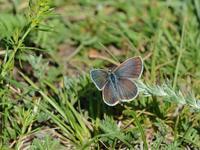 草原の風に翔ぶ蝶を追って(その19) - 不思議の森の迷い人