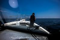2017,08/18~20 鯛ラバ - 鯛ラバ遊漁船  Miyazaki Offshore Boat Game Marine Frog