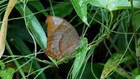2017 残暑の近場 その2 - 紀州里山の蝶たち