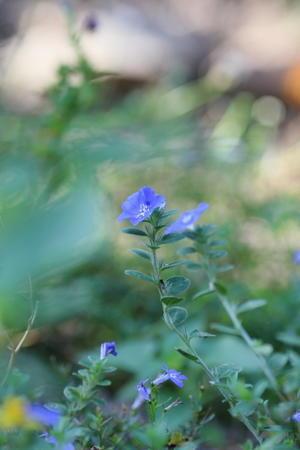8月20日の庭の様子 -