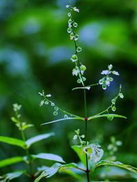 8月の野草から・・ - 野路の花散策