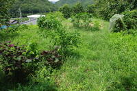 No  108  ひとり農作業(8月20日) - カメラをもってぶらぶら散歩中