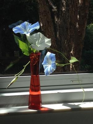 朝顔を切り花にして 主婦ランチ - 幾星霜Ⅱ