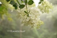 今週のマイガーデン - YUKKESCRAP