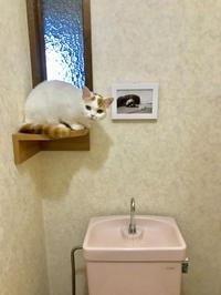 猫との週末 - 土筆の庭